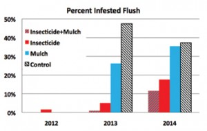 Figure 4. Percentage of flush shoots infested with ACP by treatment and year.