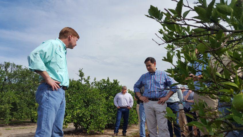 Senator rubio and commissioner putnam visit florida citrus for Rural development florida