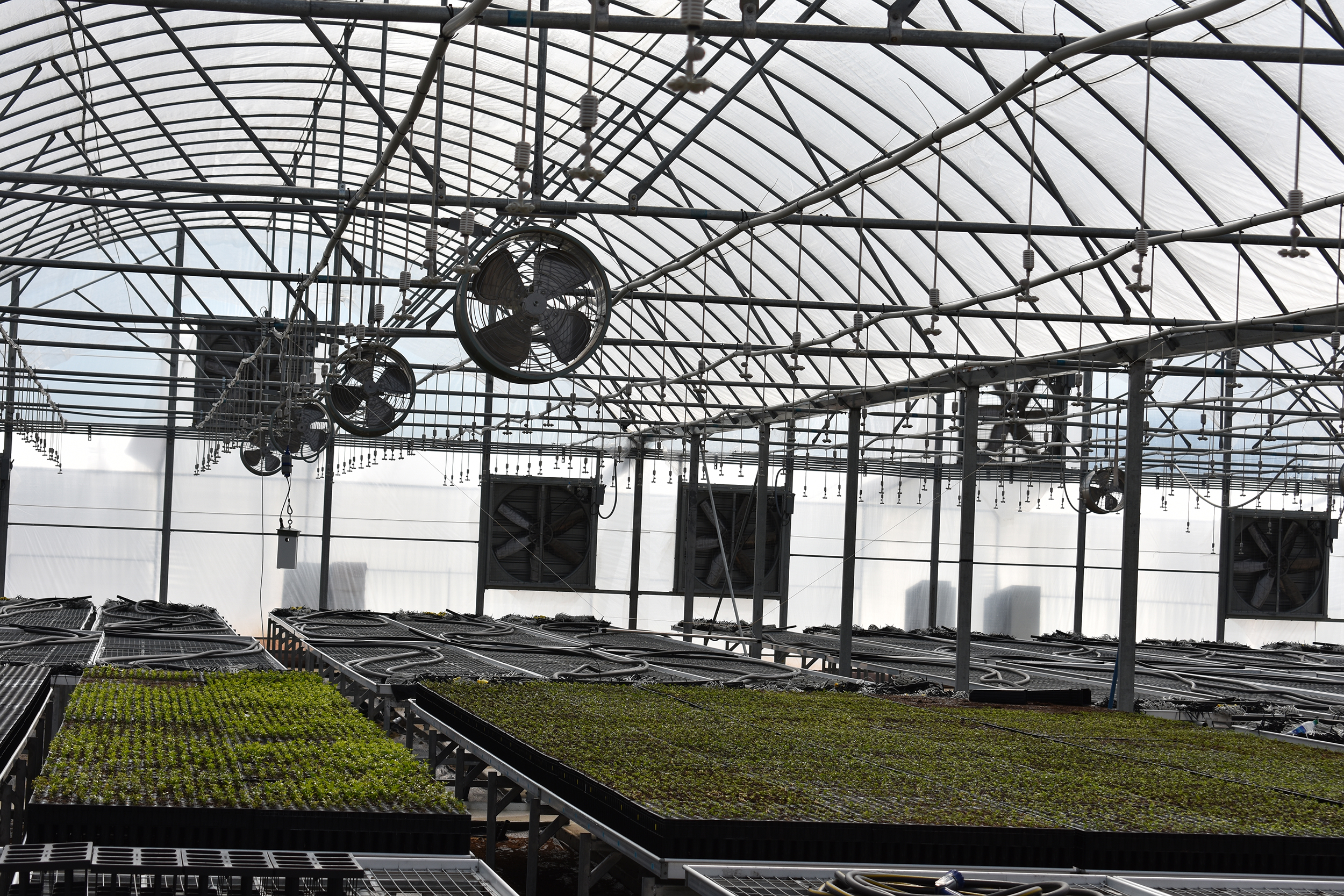 Citrific S State Of The Art Greenhouse Is Climate Controlled To Create Perfect Environment For Young Citrus Trees