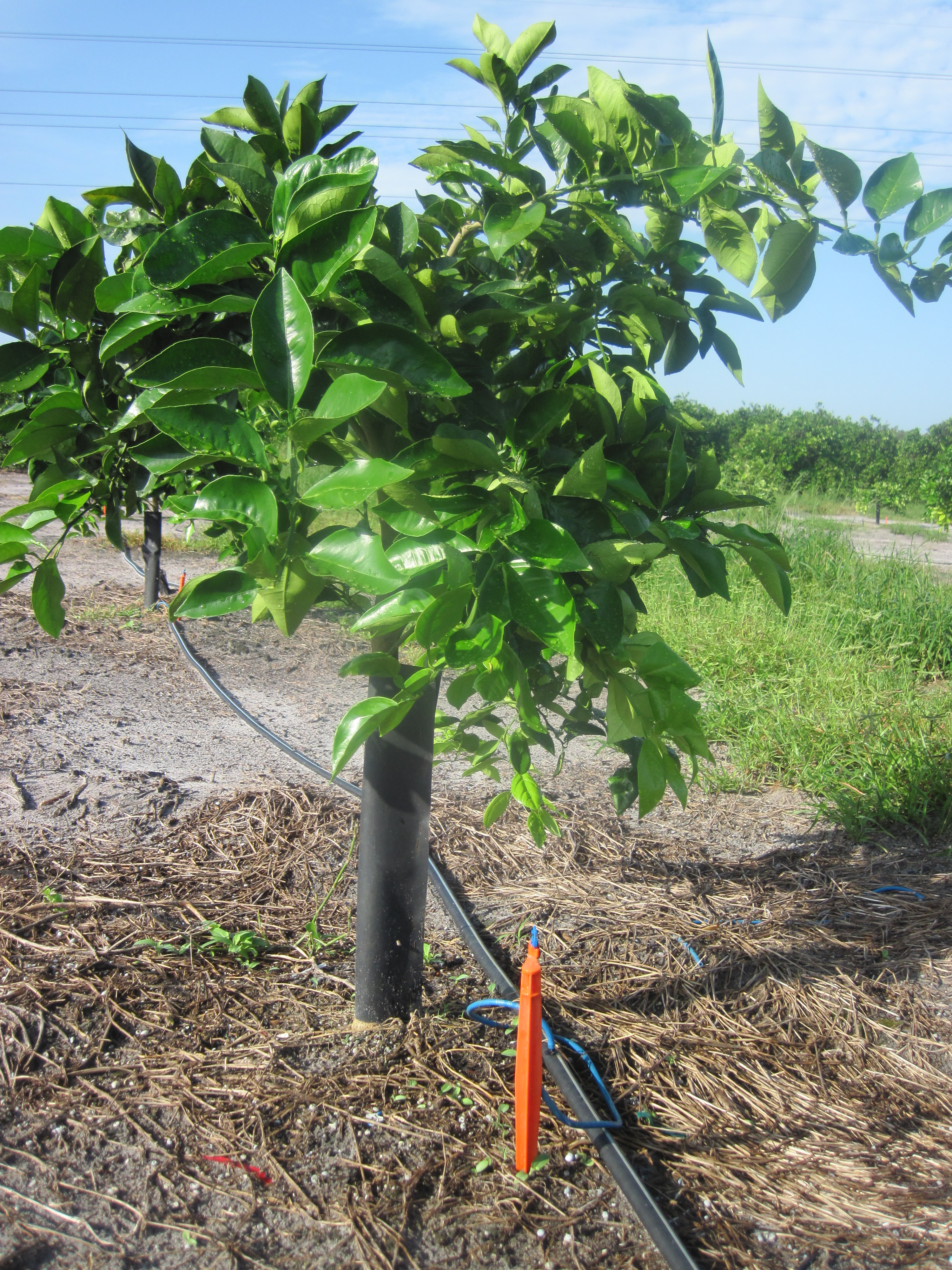 From Planning To Planting Establishing New Groves In The