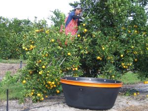 Citrus Harvester Survey