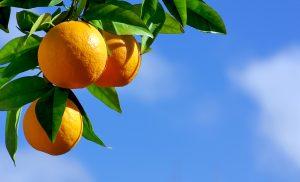 orange forecast