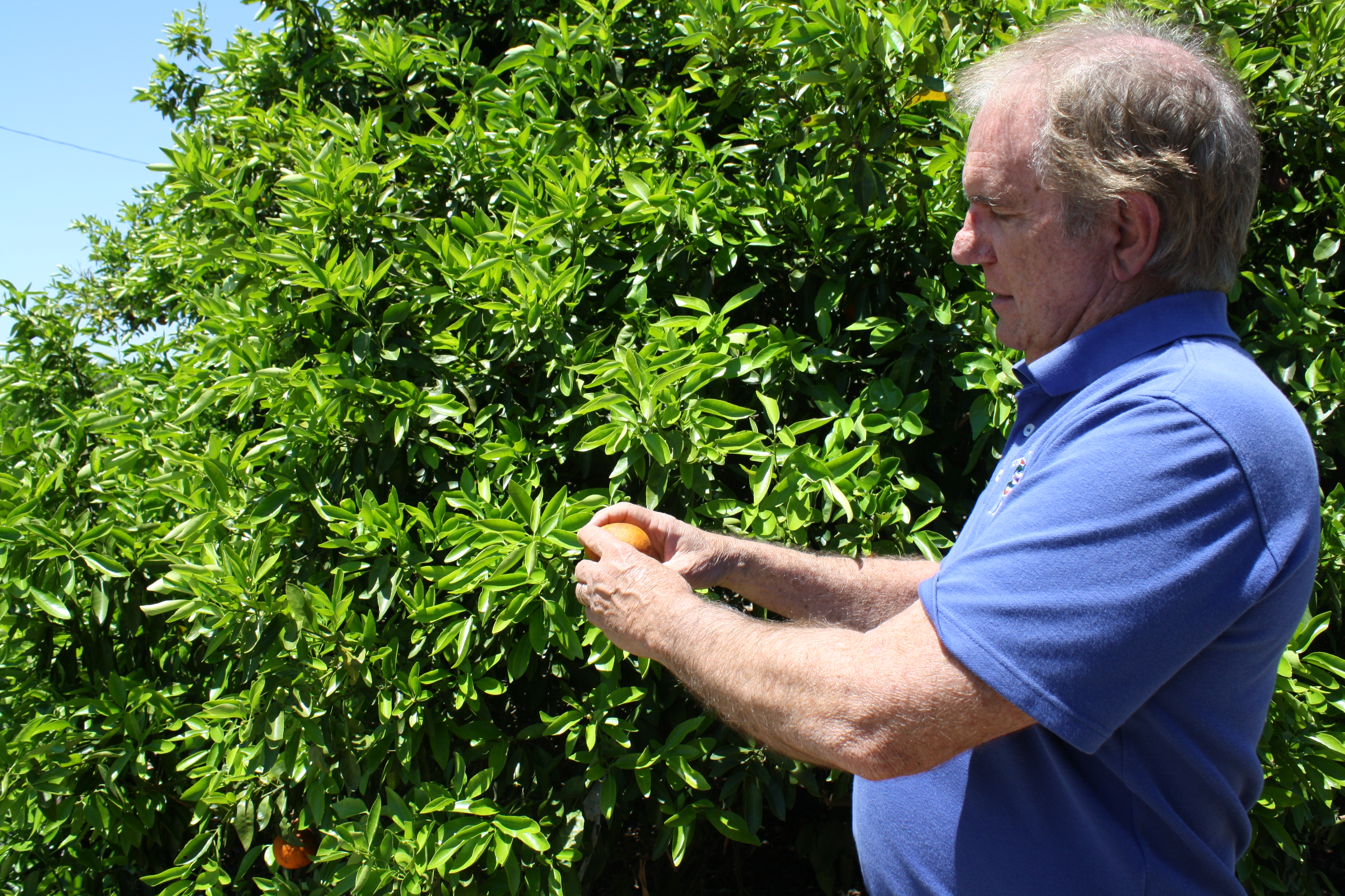 Fred Gmitter  Slow Road to Fast Genetics - Citrus Industry Magazine 26d7460019b