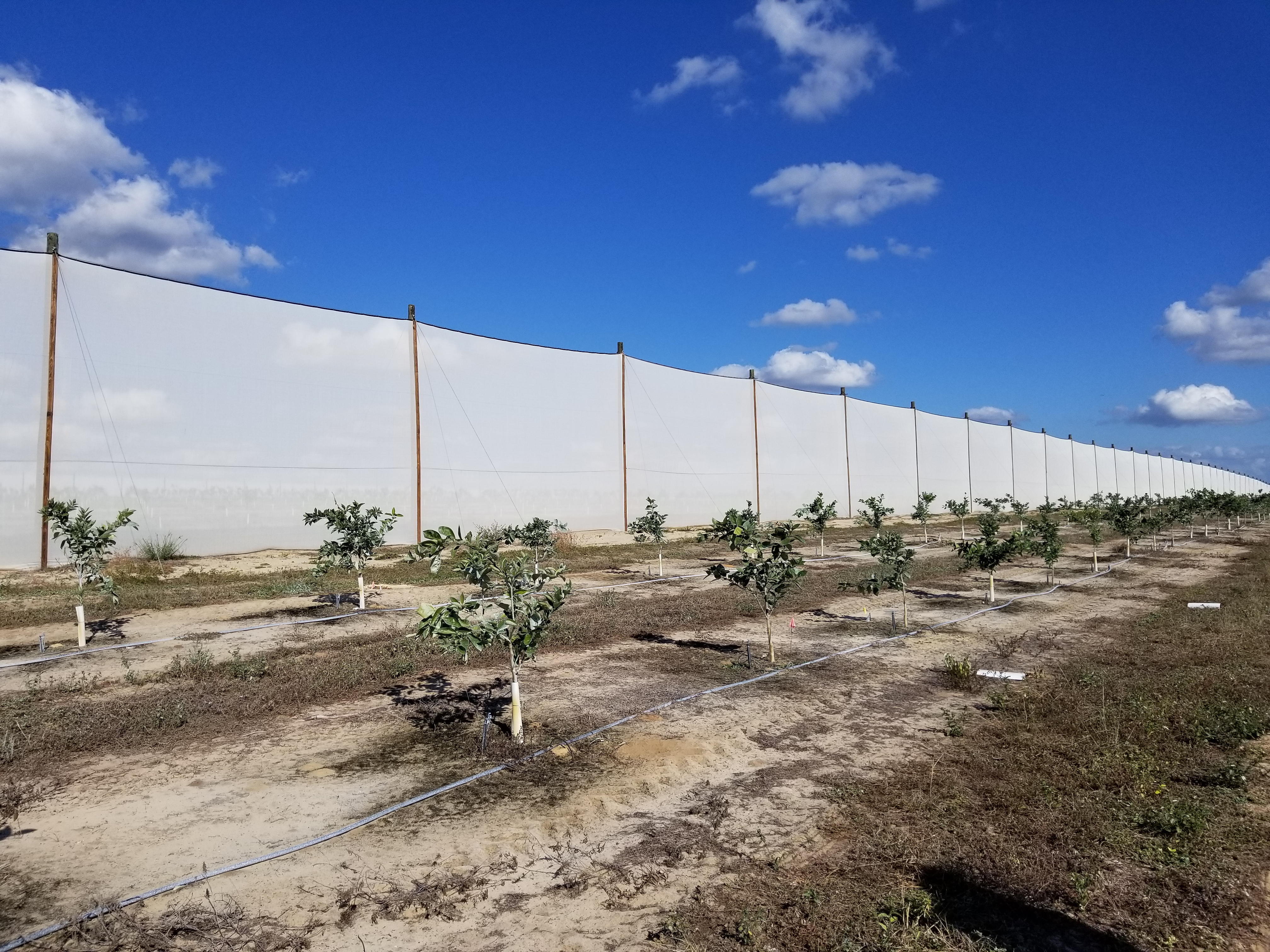 Field Testing of New HLB-Tolerant Scions and Rootstocks - Citrus ... e23dc633a6f