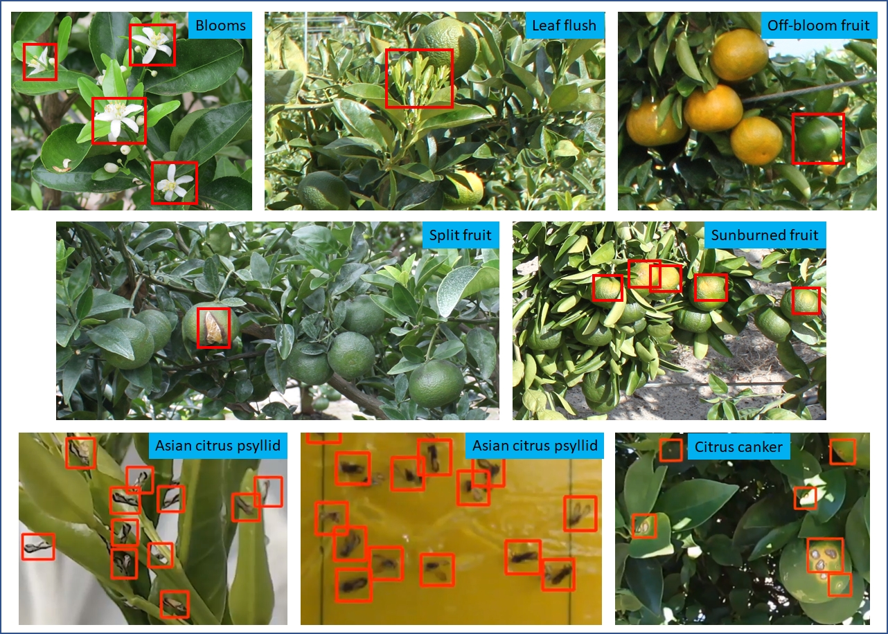 Artificial Intelligence for Detecting Citrus Pests, Diseases and